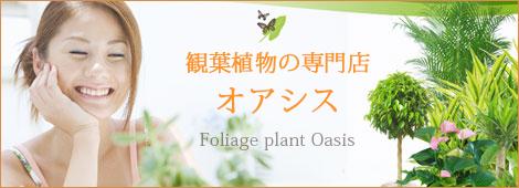 観葉植物の専門店オアシス